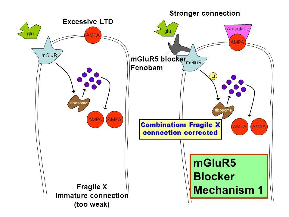 AMPA ribosome mGluR glu AMPA ribosome mGluR glu Fragile X Immature connection (too weak) Excessive LTD Stronger connection Li mGluR5 blocker Fenobam Ampakine Combination: Fragile X connection corrected mGluR5 Blocker Mechanism 1