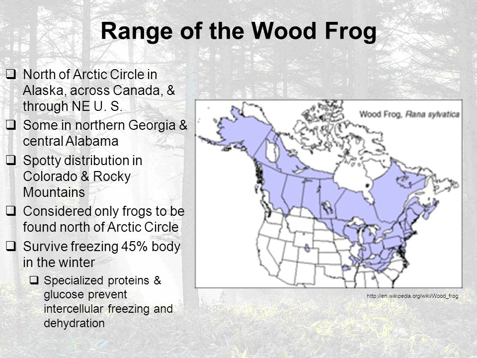 Range of the Wood Frog  North of Arctic Circle in Alaska, across Canada, & through NE U. S.  Some in northern Georgia & central Alabama  Spotty dis