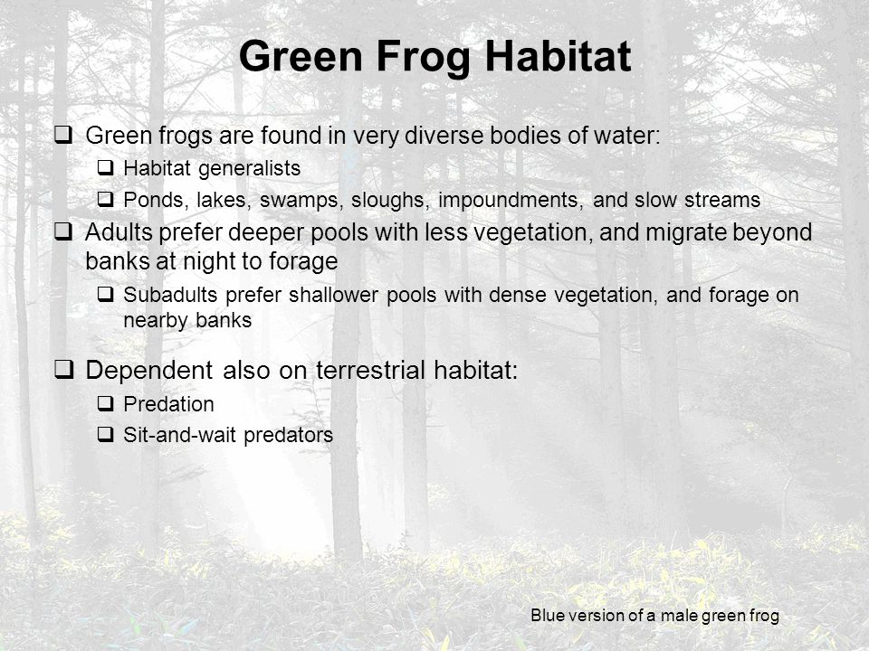 Green Frog Habitat  Green frogs are found in very diverse bodies of water:  Habitat generalists  Ponds, lakes, swamps, sloughs, impoundments, and s