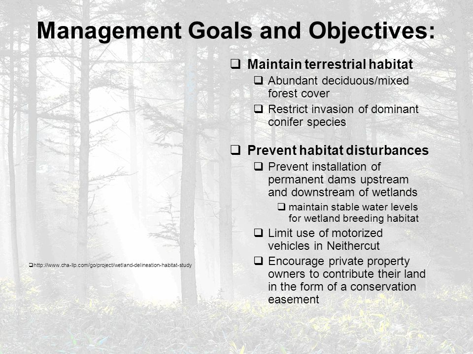 Management Goals and Objectives:  Maintain terrestrial habitat  Abundant deciduous/mixed forest cover  Restrict invasion of dominant conifer species  Prevent habitat disturbances  Prevent installation of permanent dams upstream and downstream of wetlands  maintain stable water levels for wetland breeding habitat  Limit use of motorized vehicles in Neithercut  Encourage private property owners to contribute their land in the form of a conservation easement  http://www.cha-llp.com/go/project/wetland-delineation-habitat-study