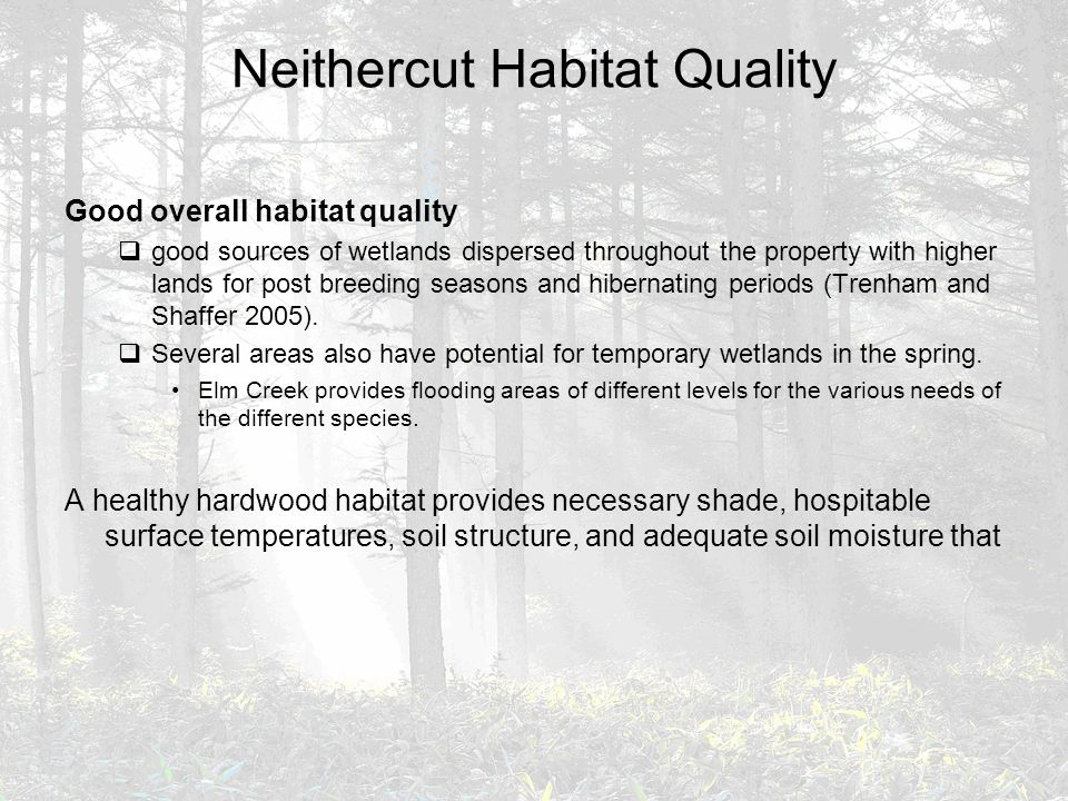 Neithercut Habitat Quality Good overall habitat quality  good sources of wetlands dispersed throughout the property with higher lands for post breedi