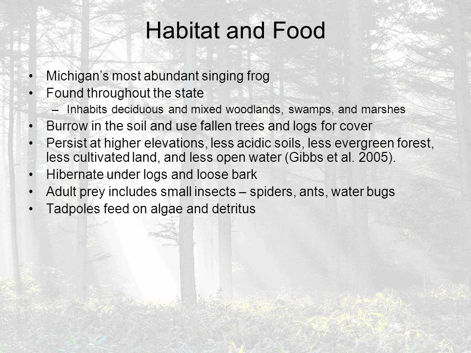 Habitat and Food Michigan's most abundant singing frog Found throughout the state –Inhabits deciduous and mixed woodlands, swamps, and marshes Burrow in the soil and use fallen trees and logs for cover Persist at higher elevations, less acidic soils, less evergreen forest, less cultivated land, and less open water (Gibbs et al.