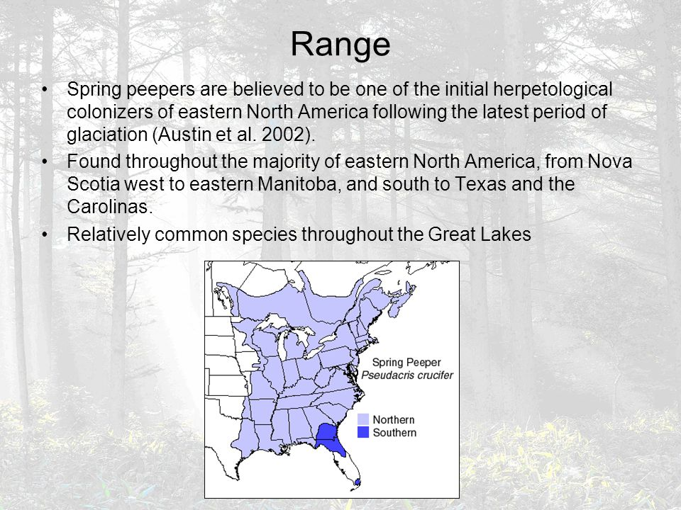 Range Spring peepers are believed to be one of the initial herpetological colonizers of eastern North America following the latest period of glaciation (Austin et al.
