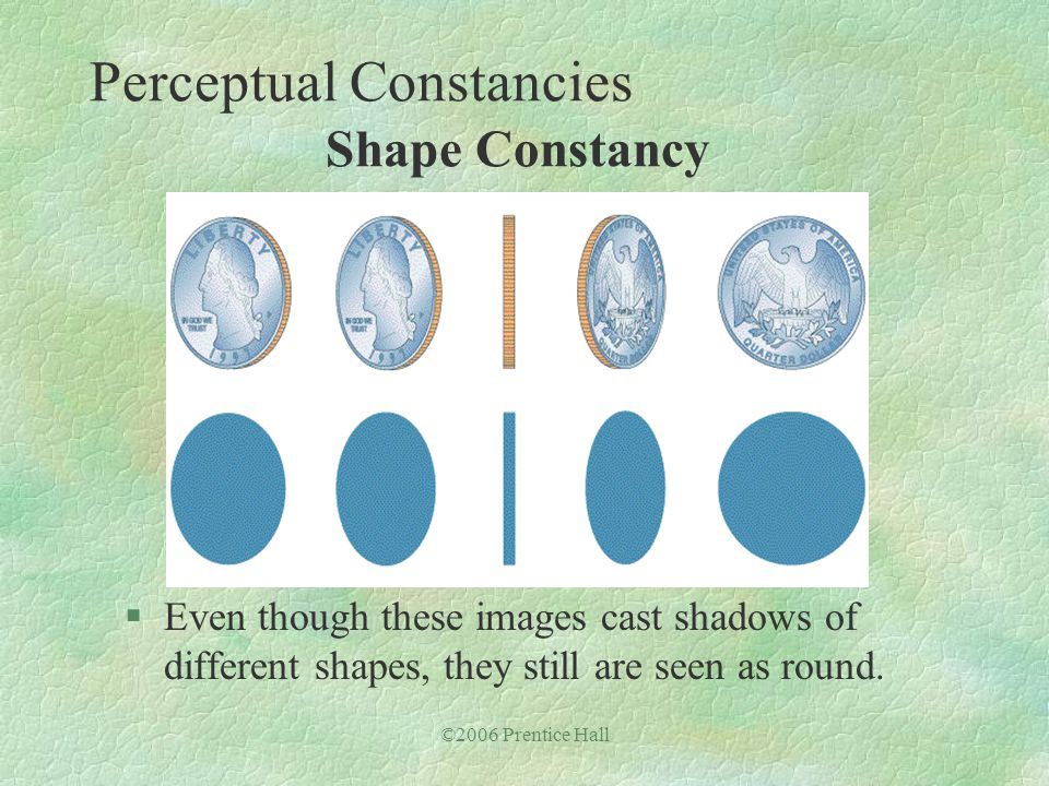 ©2006 Prentice Hall §Even though these images cast shadows of different shapes, they still are seen as round. Perceptual Constancies Shape Constancy