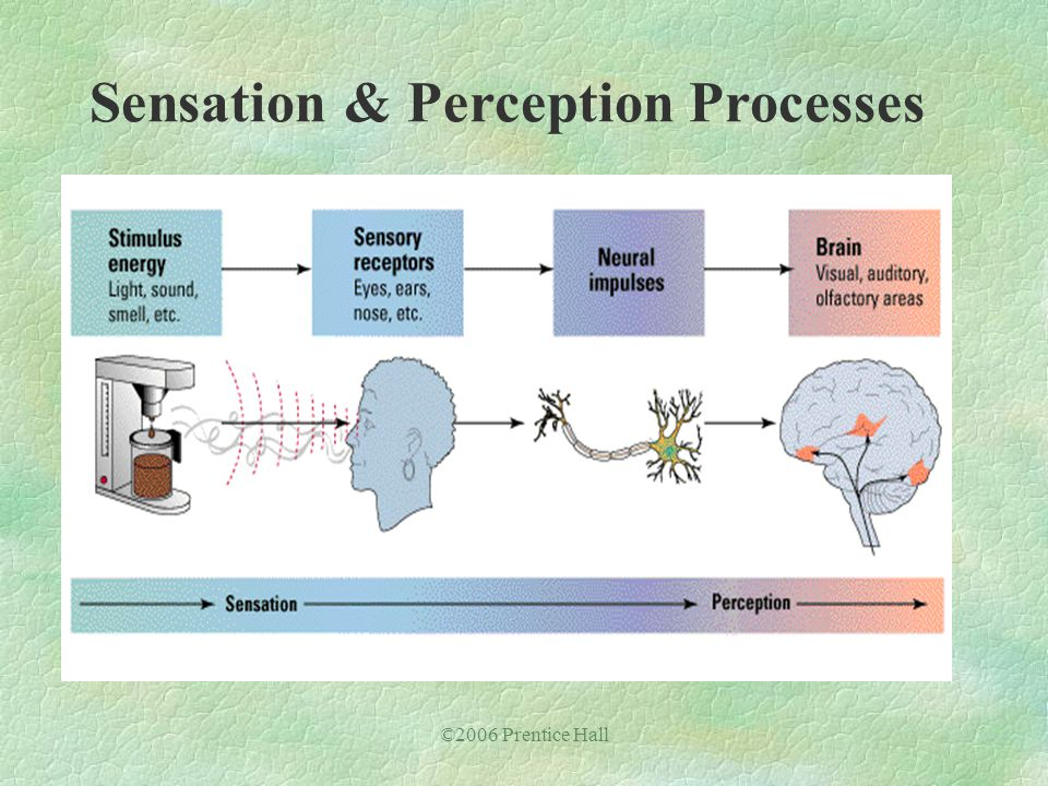 ©2006 Prentice Hall Sensation & Perception Processes