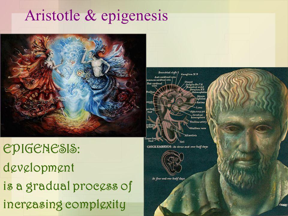 Aristotle & epigenesis EPIGENESIS: development is a gradual process of increasing complexity