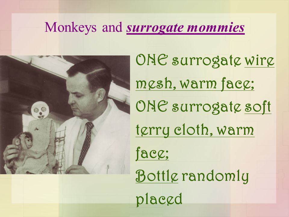Monkeys and surrogate mommies ONE surrogate wire mesh, warm face; ONE surrogate soft terry cloth, warm face; Bottle randomly placed