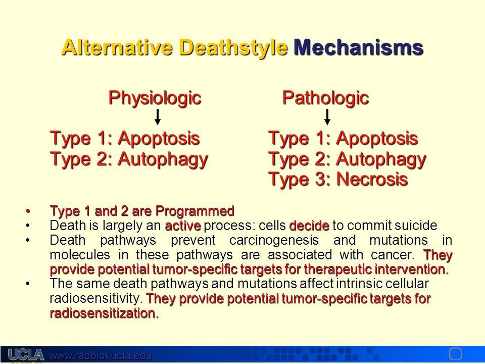 www.radbiol.ucla.edu Alternative Deathstyle Mechanisms Programmed cell death type 1: Apoptosis Programmed cell death type 2: Autophagy Pathological De