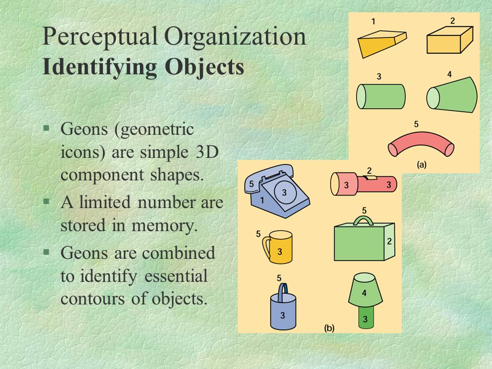 §Geons (geometric icons) are simple 3D component shapes. §A limited number are stored in memory. §Geons are combined to identify essential contours of