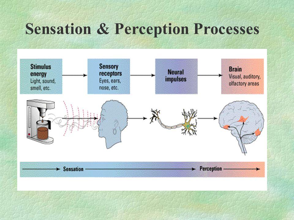 Sensation & Perception Processes