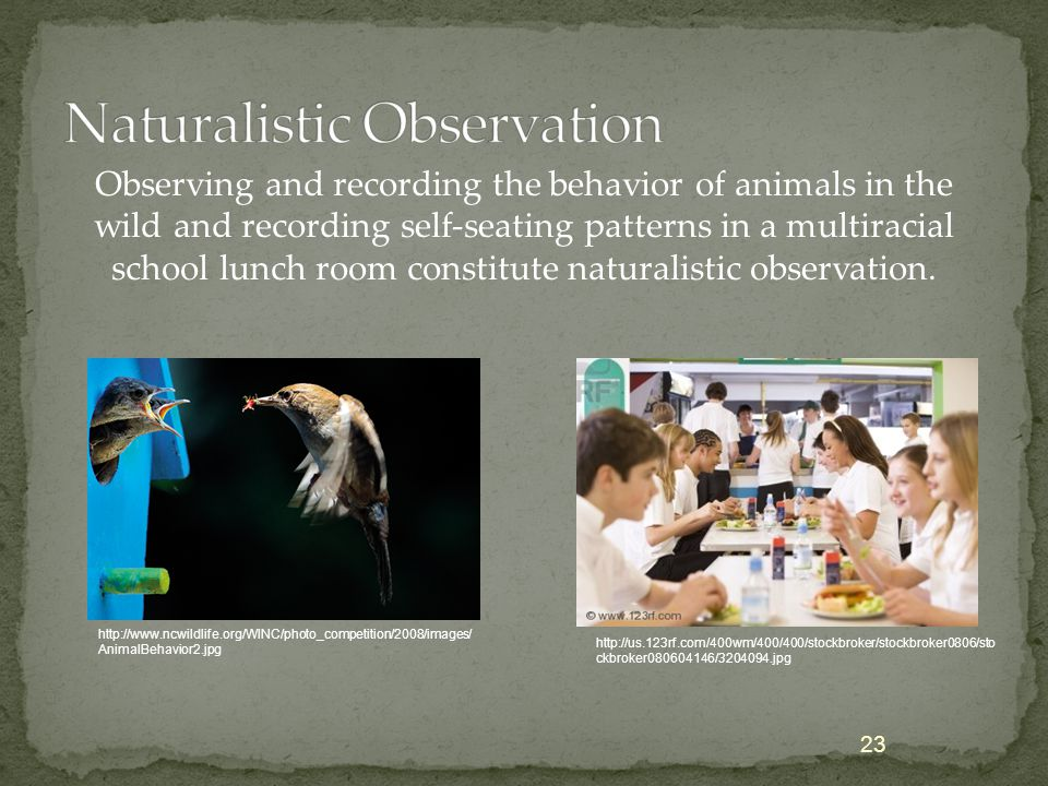 Observing and recording the behavior of animals in the wild and recording self-seating patterns in a multiracial school lunch room constitute naturali
