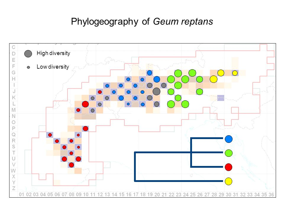 Phylogeography of Geum reptans High diversity Low diversity