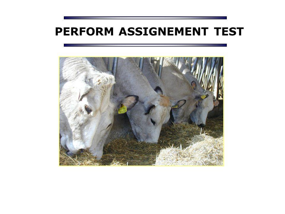 PERFORM ASSIGNEMENT TEST