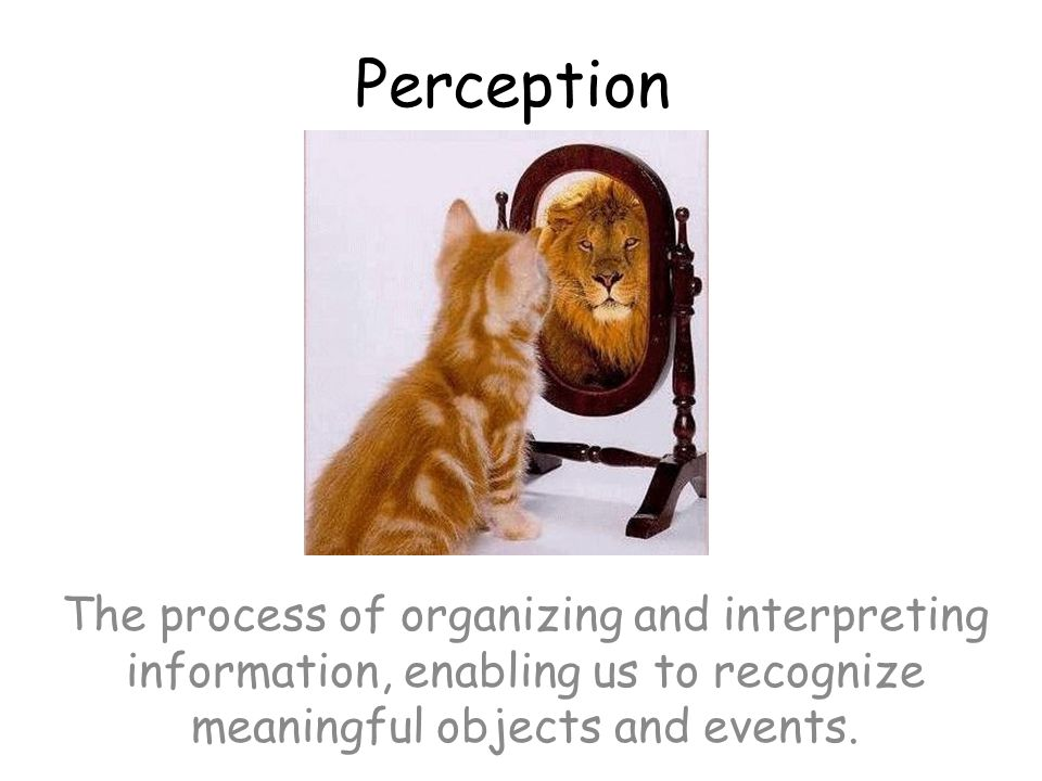 Perception The process of organizing and interpreting information, enabling us to recognize meaningful objects and events.