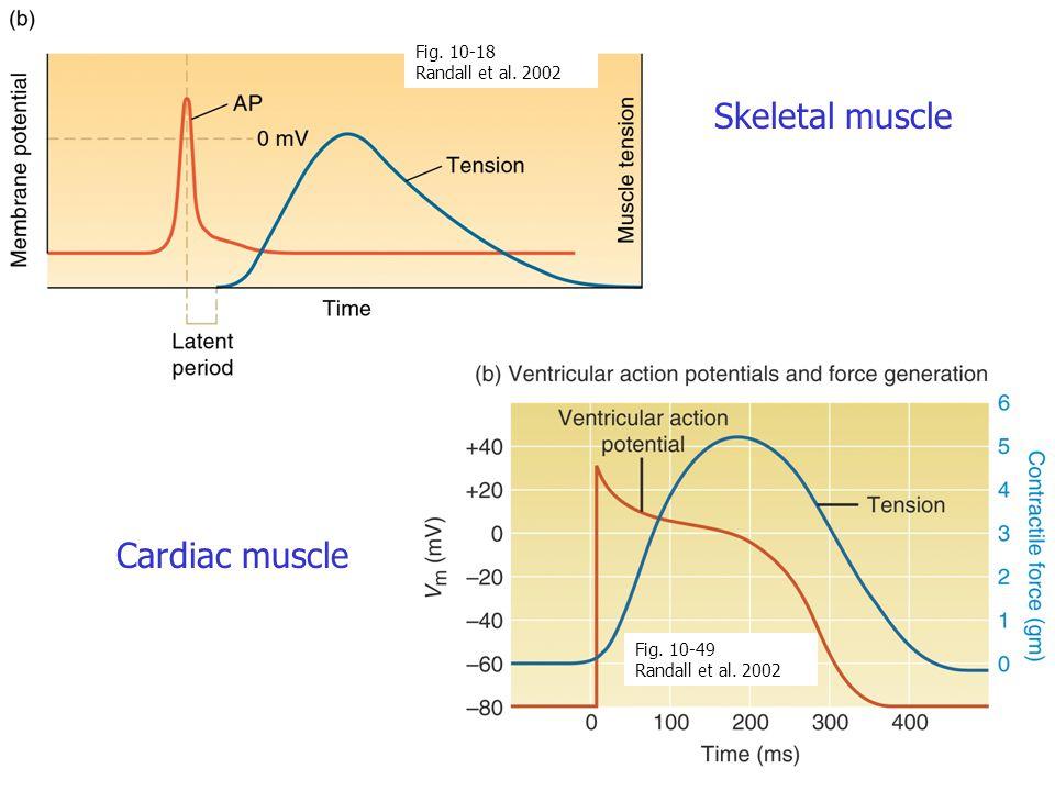 Skeletal muscle Cardiac muscle Fig. 10-49 Randall et al. 2002 Fig. 10-18 Randall et al. 2002
