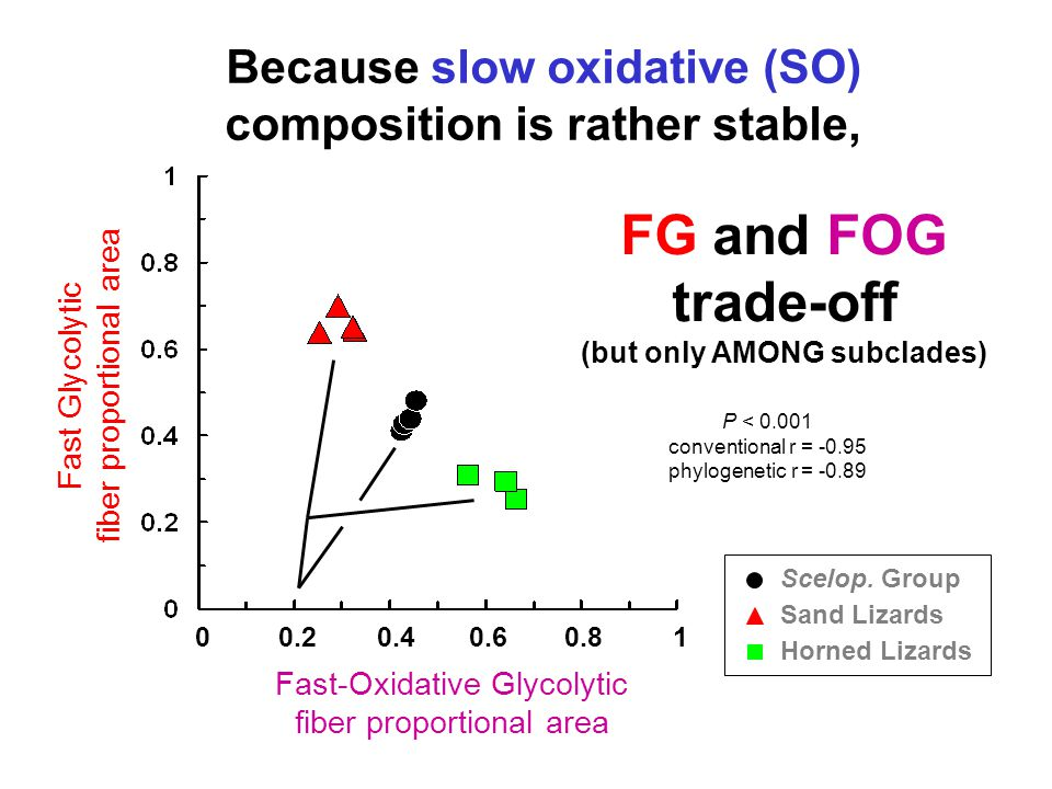 Because slow oxidative (SO) composition is rather stable, 0 0.2 0.4 0.6 0.8 1 Scelop.