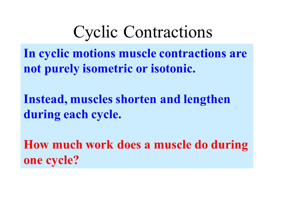 Cyclic Contractions In cyclic motions muscle contractions are not purely isometric or isotonic.