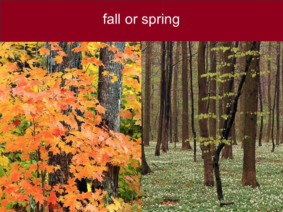 fall or spring