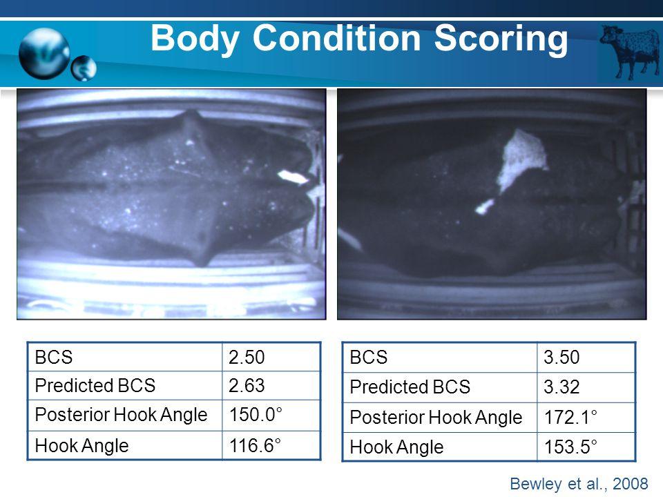 Body Condition Scoring BCS2.50 Predicted BCS2.63 Posterior Hook Angle150.0° Hook Angle116.6° BCS3.50 Predicted BCS3.32 Posterior Hook Angle172.1° Hook