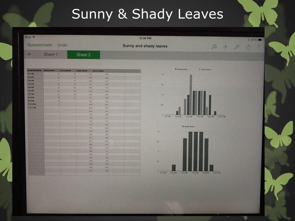 Sunny & Shady Leaves
