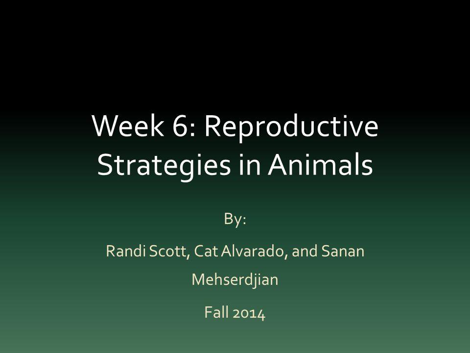 Week 6: Reproductive Strategies in Animals By: Randi Scott, Cat Alvarado, and Sanan Mehserdjian Fall 2014