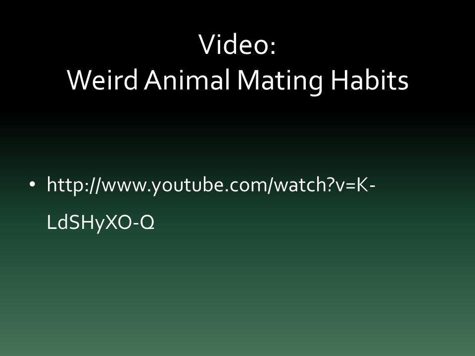 Video: Weird Animal Mating Habits http://www.youtube.com/watch v=K- LdSHyXO-Q