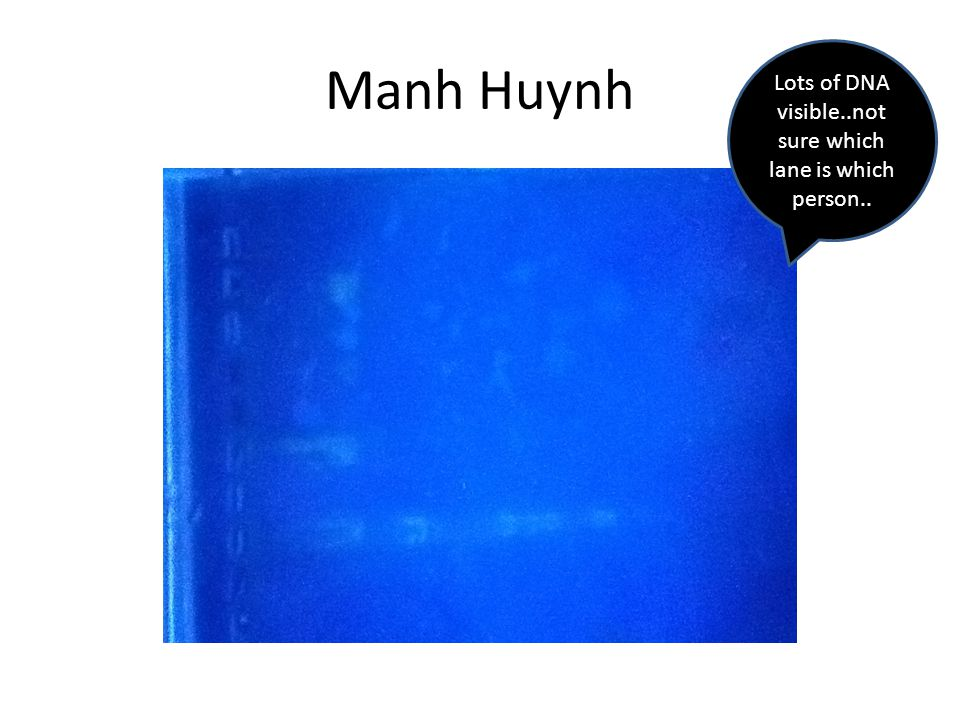 Manh Huynh Lots of DNA visible..not sure which lane is which person..