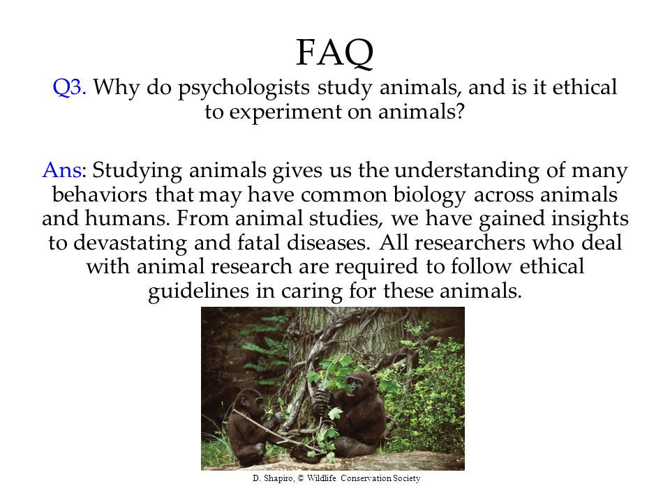 FAQ Q3. Why do psychologists study animals, and is it ethical to experiment on animals? Ans: Studying animals gives us the understanding of many behav