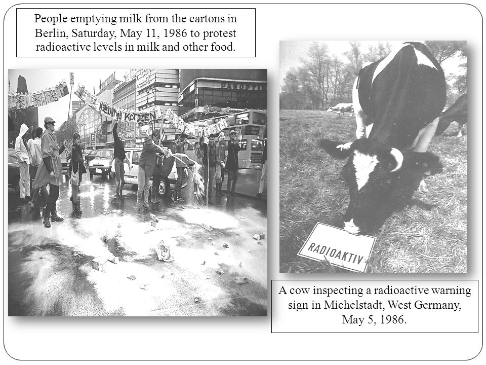 A cow inspecting a radioactive warning sign in Michelstadt, West Germany, May 5, 1986.