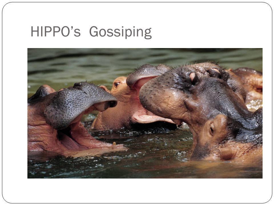 HIPPO's Gossiping