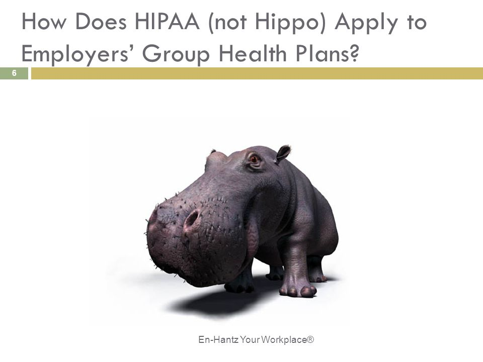 6 How Does HIPAA (not Hippo) Apply to Employers' Group Health Plans? En-Hantz Your Workplace®