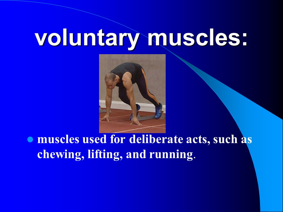 voluntary muscles: muscles used for deliberate acts, such as chewing, lifting, and running.