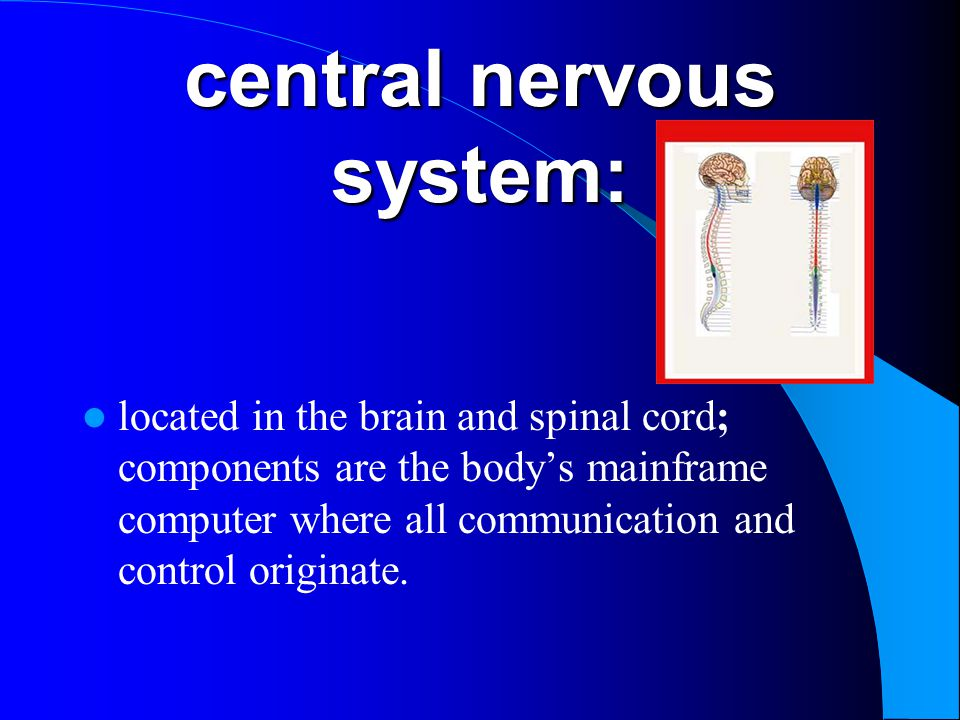 central nervous system: located in the brain and spinal cord; components are the body's mainframe computer where all communication and control origina