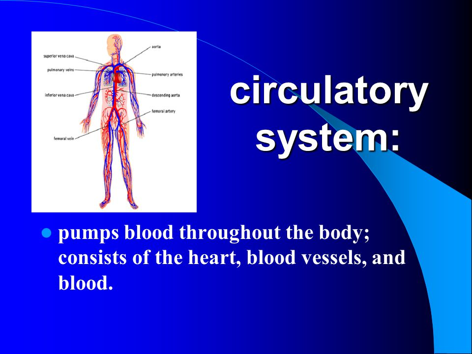 circulatory system: pumps blood throughout the body; consists of the heart, blood vessels, and blood.