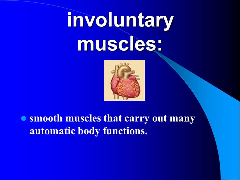 involuntary muscles: smooth muscles that carry out many automatic body functions.