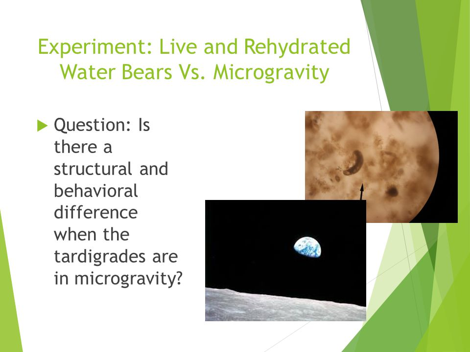 Experiment: Live and Rehydrated Water Bears Vs.