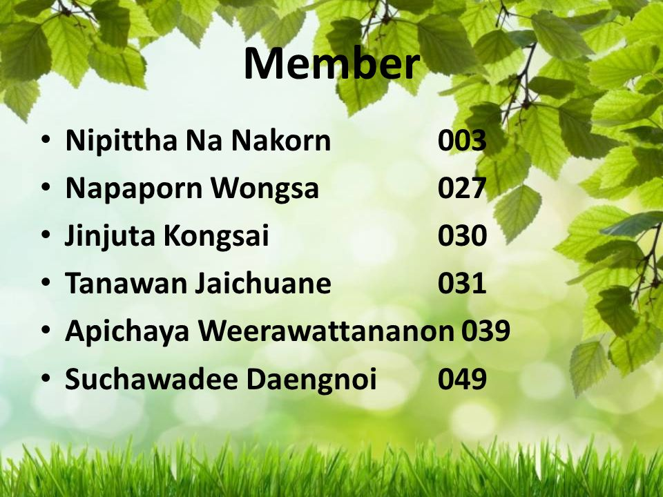 Member Nipittha Na Nakorn 003 Napaporn Wongsa 027 Jinjuta Kongsai 030 Tanawan Jaichuane 031 Apichaya Weerawattananon 039 Suchawadee Daengnoi 049