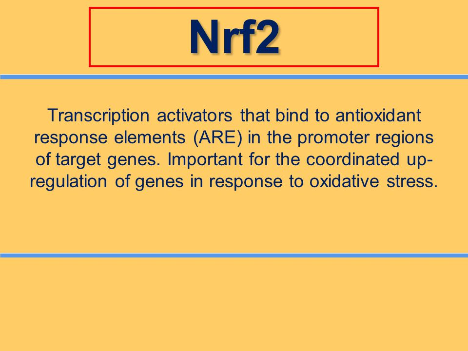 Nrf2 Transcription activators that bind to antioxidant response elements (ARE) in the promoter regions of target genes. Important for the coordinated