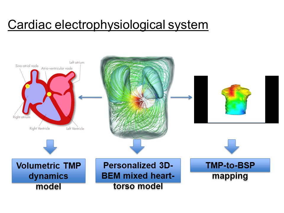 Cardiac electrophysiological system Personalized 3D- BEM mixed heart- torso model Volumetric TMP dynamics model TMP-to-BSP mapping