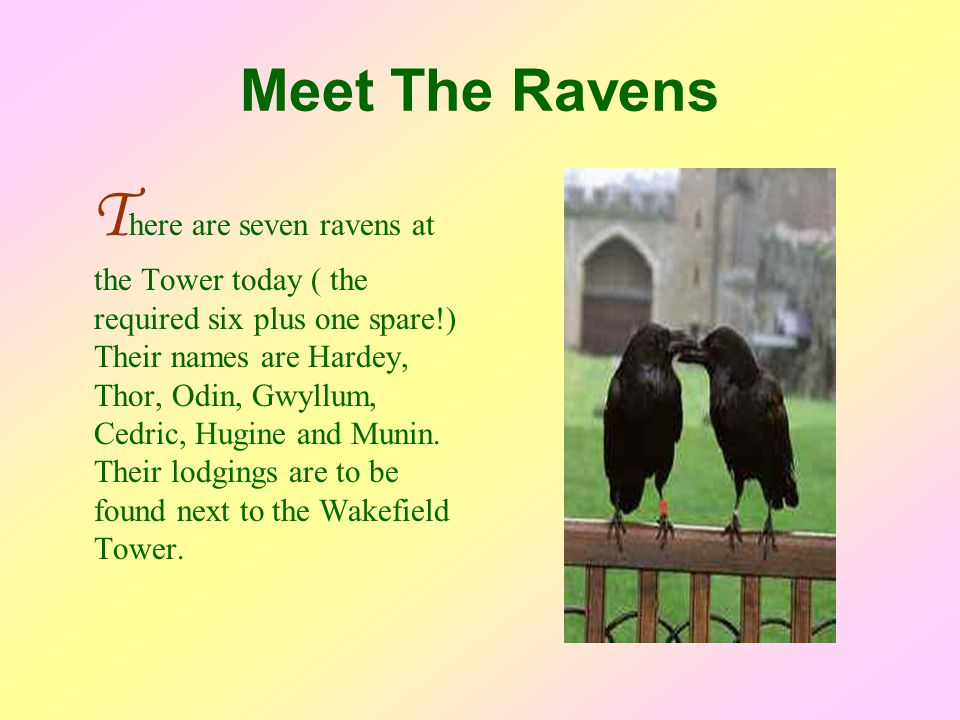 Meet The Ravens T here are seven ravens at the Tower today ( the required six plus one spare!) Their names are Hardey, Thor, Odin, Gwyllum, Cedric, Hugine and Munin.
