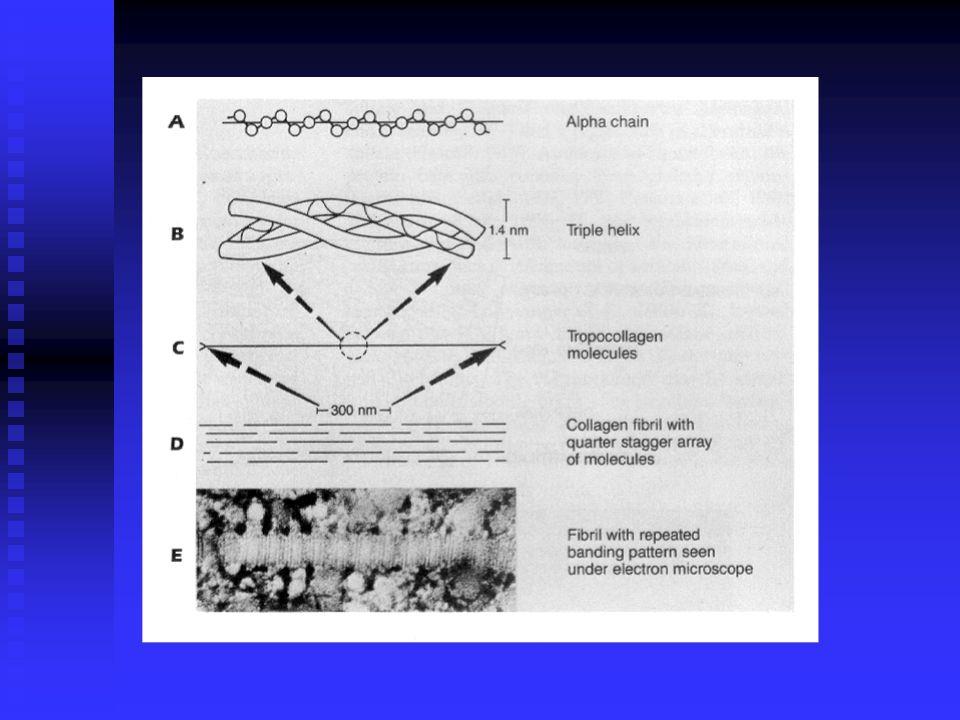 PURE SHEAR storage modulus ( G` ), loss modulus ( G`` ) dynamic shear modulus ( G* ) 2 = ( G`) 2 + ( G``) 2 phase shift angle (  tan  G``/ G`) FIG.