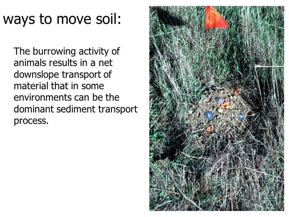 ways to move soil: The burrowing activity of animals results in a net downslope transport of material that in some environments can be the dominant sediment transport process.