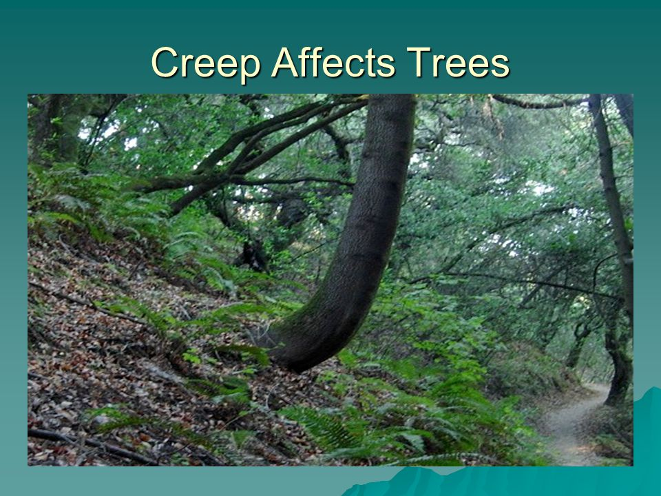 Creep Affects Trees
