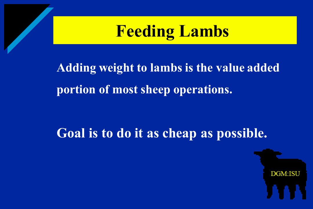 Adding weight to lambs is the value added portion of most sheep operations. Goal is to do it as cheap as possible. Feeding Lambs DGM:ISU