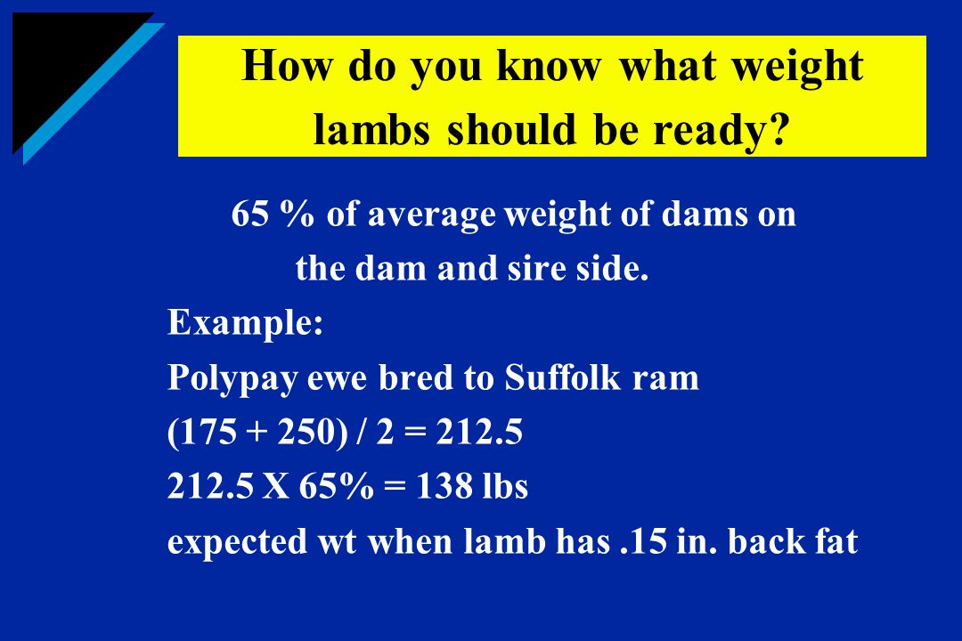 65 % of average weight of dams on the dam and sire side. Example: Polypay ewe bred to Suffolk ram (175 + 250) / 2 = 212.5 212.5 X 65% = 138 lbs expect