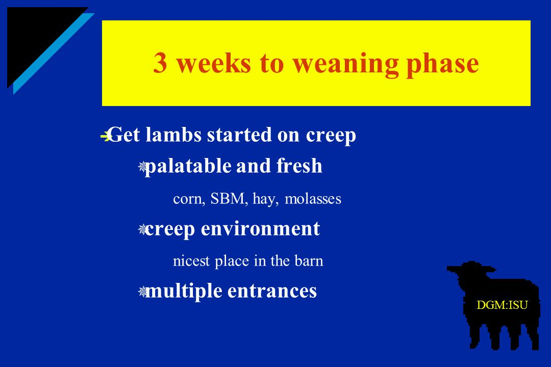  Get lambs started on creep  palatable and fresh corn, SBM, hay, molasses  creep environment nicest place in the barn  multiple entrances 3 weeks
