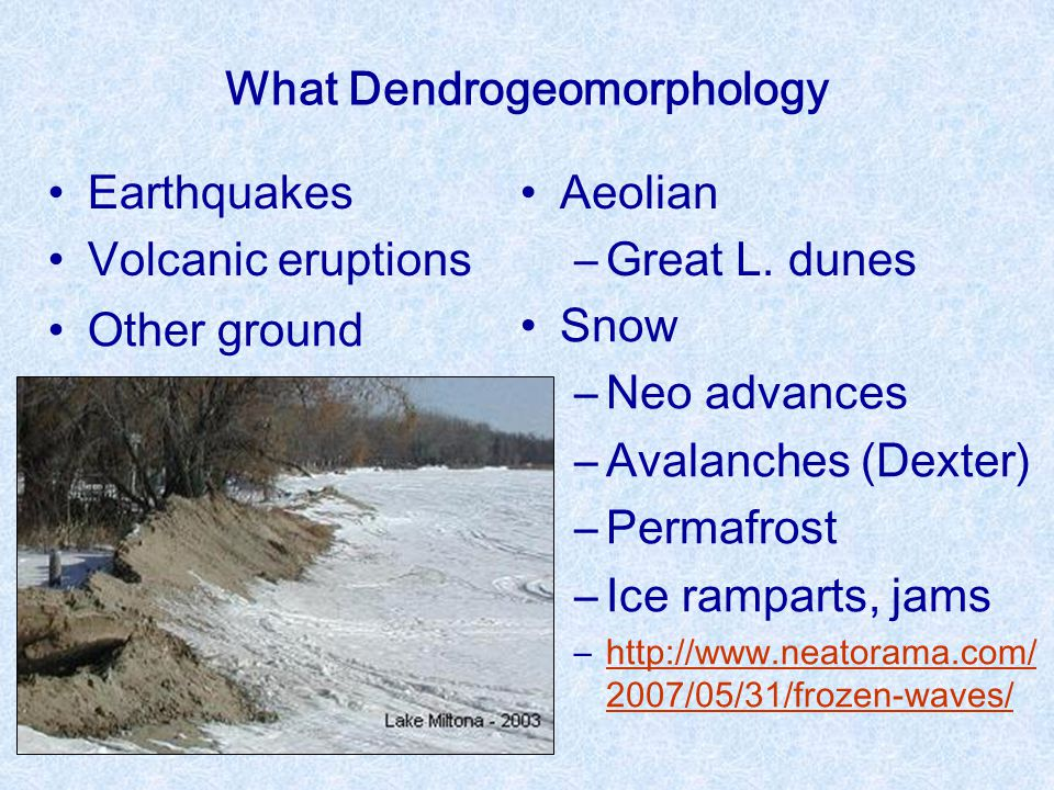 What Dendrogeomorphology Earthquakes Volcanic eruptions Other ground ―Mud/debris flow, rockfall ―Soil creep Water ―Shoreline ―Riverine Aeolian ―Great L.