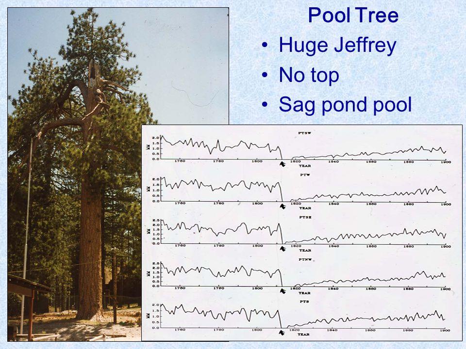 Pool Tree Huge Jeffrey No top Sag pond pool