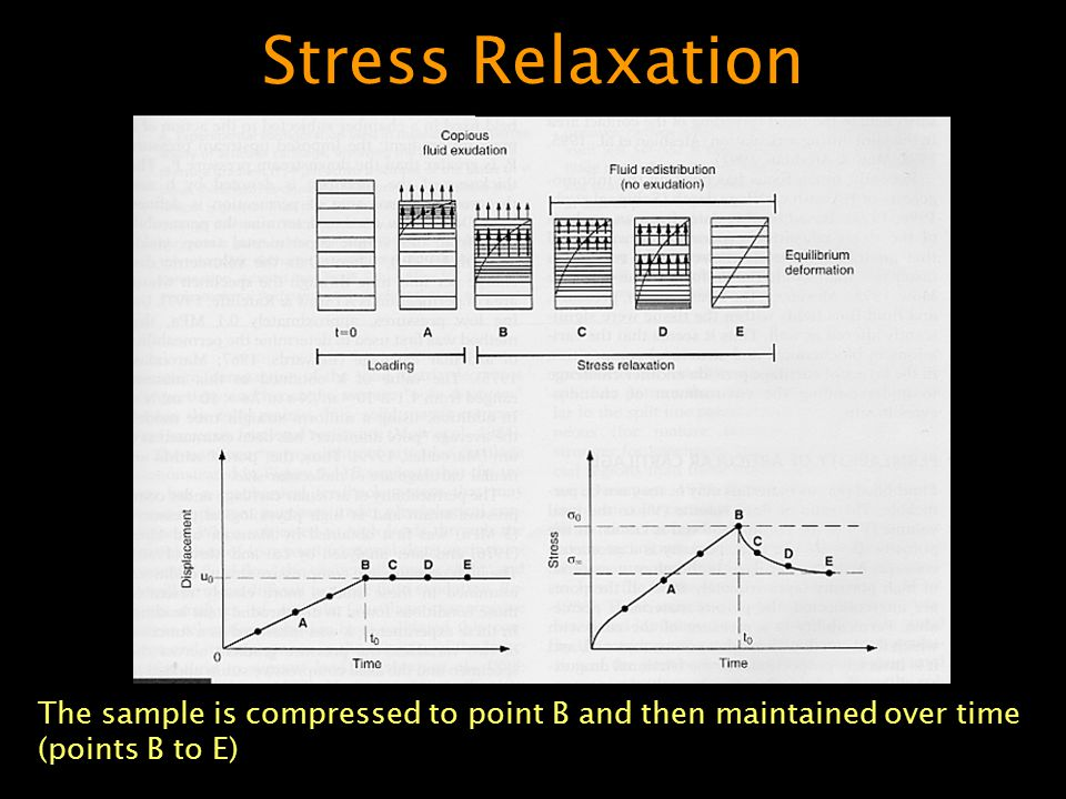 Stress Relaxation The sample is compressed to point B and then maintained over time (points B to E)