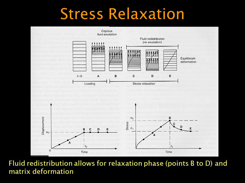Stress Relaxation Fluid redistribution allows for relaxation phase (points B to D) and matrix deformation